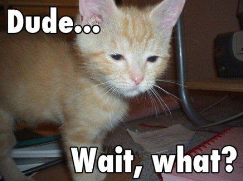 Stoned-Cat.jpg